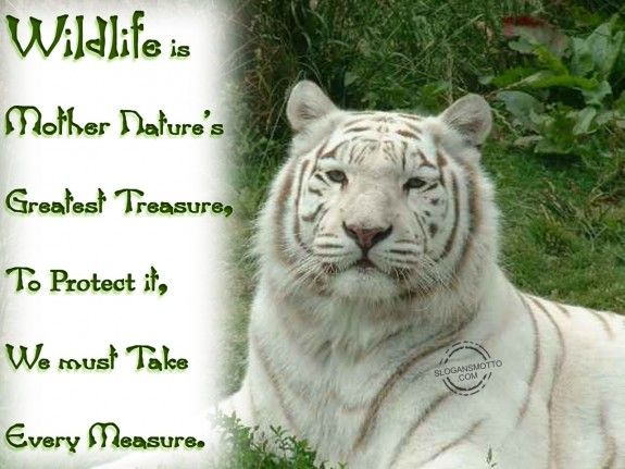 protect the wildlife   Wildlife is Mother Nature's greatest treasure, To protect it, we ...