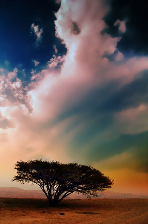 rainbow skyPhotos, Clouds, Rainbows Connection, Trees Photography, Trees Of Life, Lion King, Beautiful Sky, Nature Photography, Earth Day