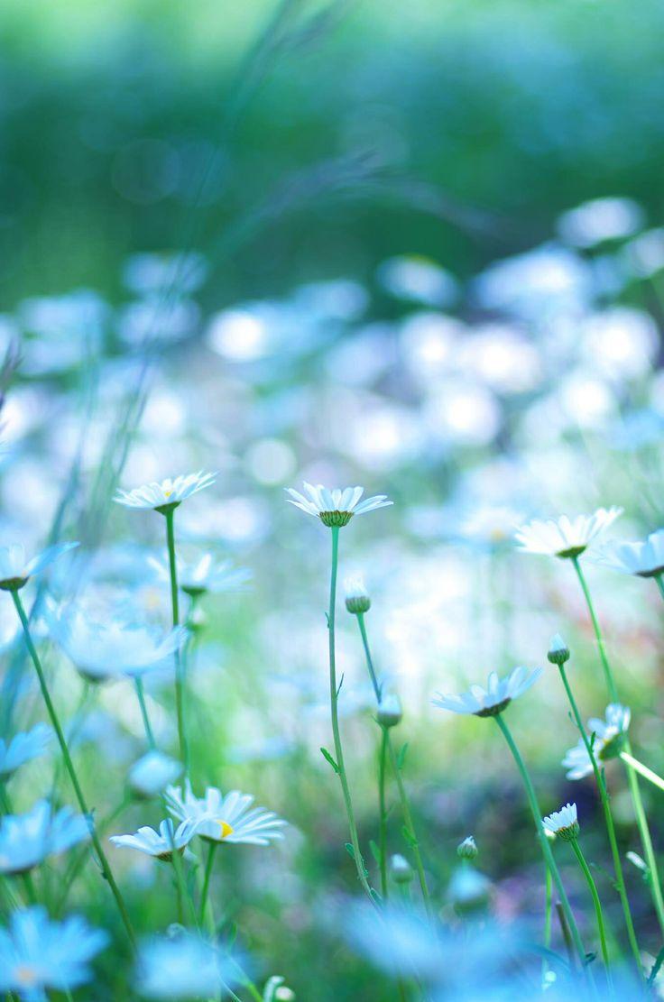 春の花 埼玉 横瀬にて