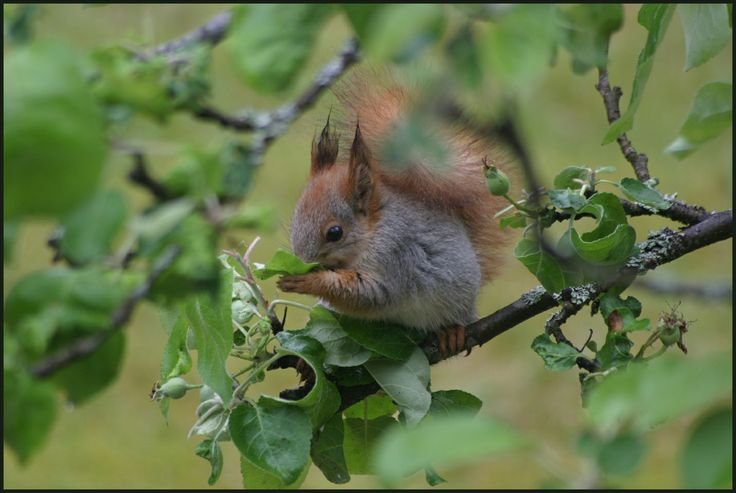 He (or she) was only drinking the rain water not eating our apples.