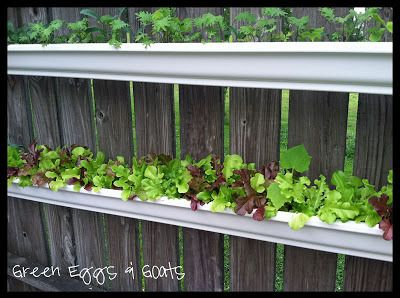 Short on space? Plant a gutter garden! Perfect for lettuce and greens! Must see!