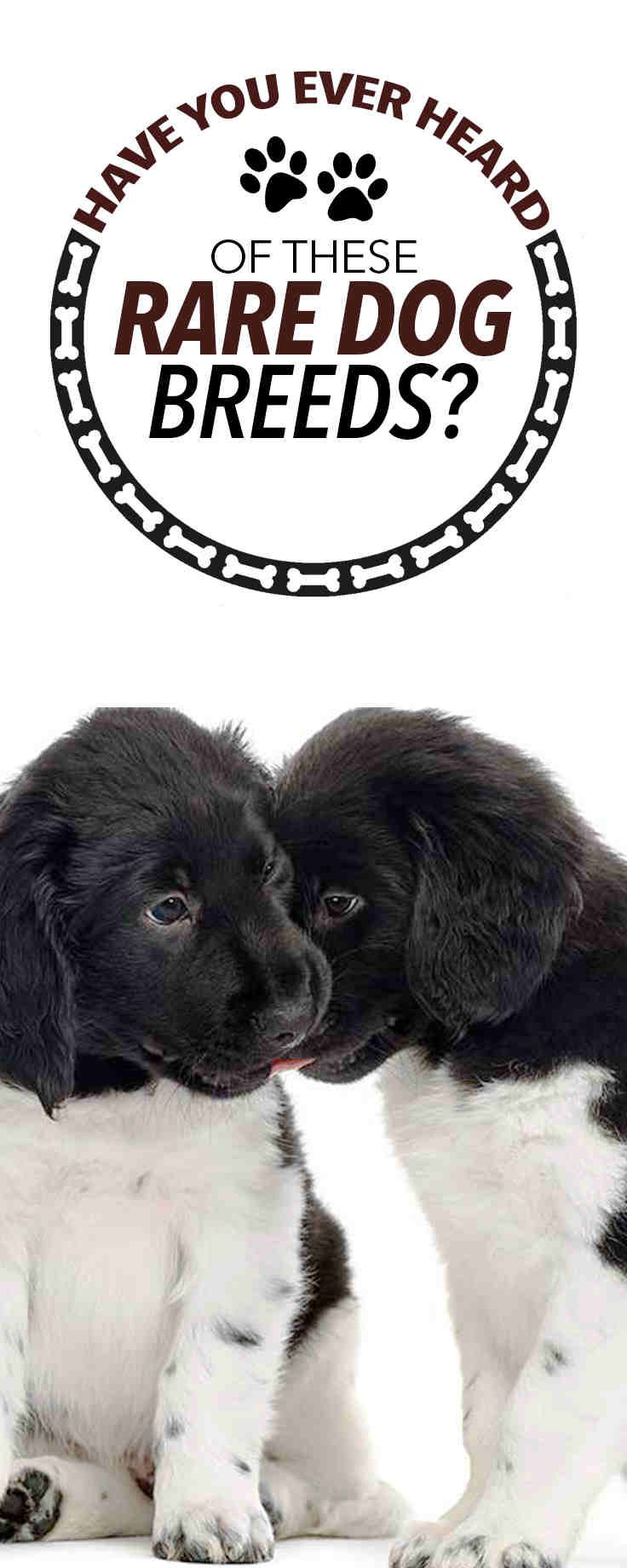 We Have Rounded Up Some Of The Rarest Dog Breeds The Animal Kingdom Has To Offer Dog Breeds Best Dog Breeds Rare Dog Breeds