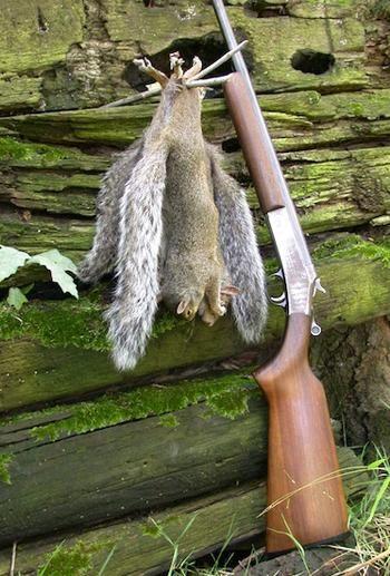 Why I Like Hunting Squirrels With a Shotgun   Field & Stream