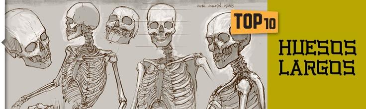 Top 10: Los huesos más largos. ¿Sabes cuáles son?: Top 10, Más Largos, Huesos Más, Sabes Cuáles