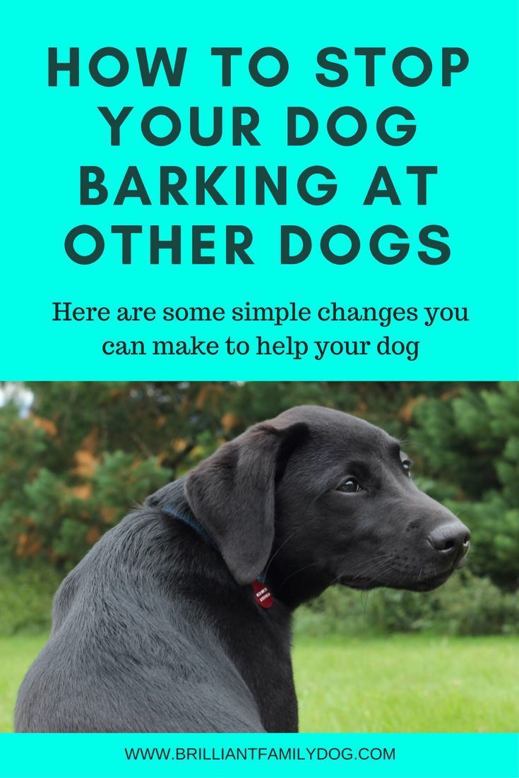 How To Train Your Dog Not To Bark At Other Dogs On Walks Dog