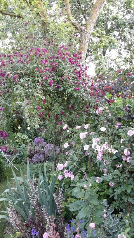 Été  jardin de maggy