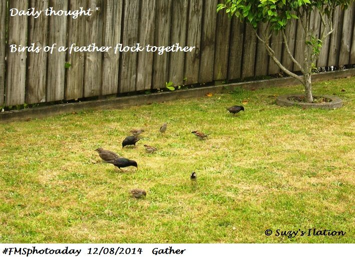 #FMSphotoaday Birds of a feather flock together Once  on the #spiritual path this saying starts to make so much sense in relation to vibrational energy. When you are a vibrational match, you come together and drift apart when you are no longer a vibrational match. Something to ponder over.   https://www.facebook.com/SuzysIlation