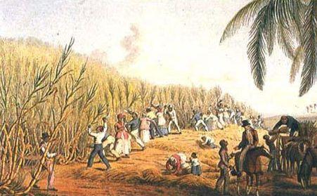 Questa immagine mostra una piantagione di canna da zucchero: durante il 1600 gli olandesi provarono a sottrarre queste piantagioni ai portoghesi, ma il loro dominio non durò per molto