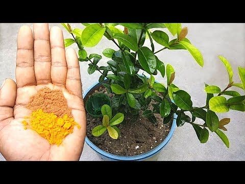 Naturally Remove Ants From Plants Soil