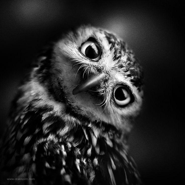 Photo Curious by DrakSpirit on 500px