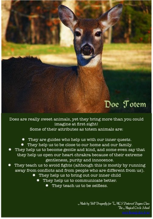 Doe Totem. Totems and Spirit Animals. Pin created by Bell Dragonfly for The Magical Circle School Class Pinterest Pagans. www.themagicalcircle.net