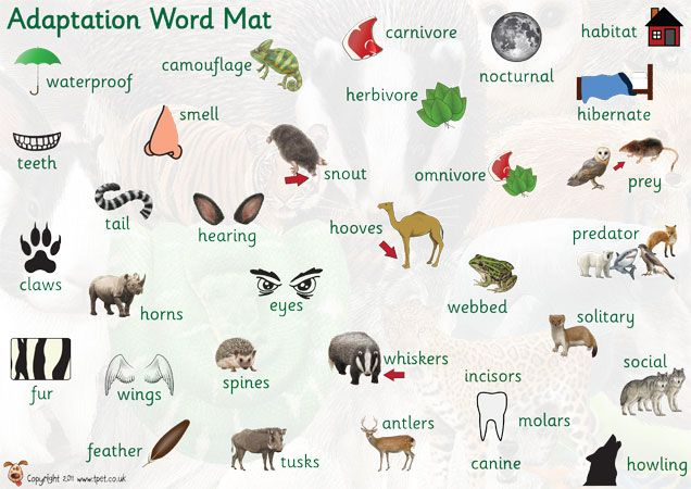Teacher's Pet Displays » Adaptation Word Mat » FREE downloadable EYFS, KS1, KS2 classroom display and teaching aid resources » A Sparklebox alternative
