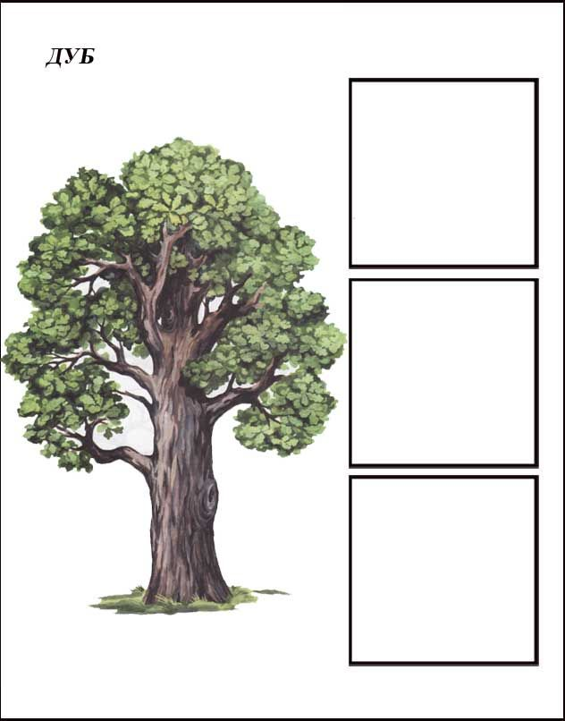 igra-derevya-dub-1.jpg (632×806)