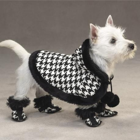 Westie in Houndstooth
