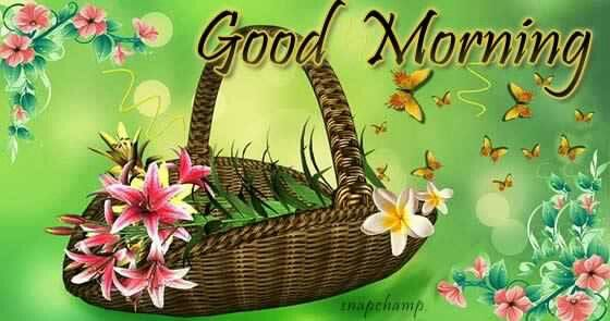 Shortstraw Good Morning Sunshine Zip : Best images about have a nice day on pinterest