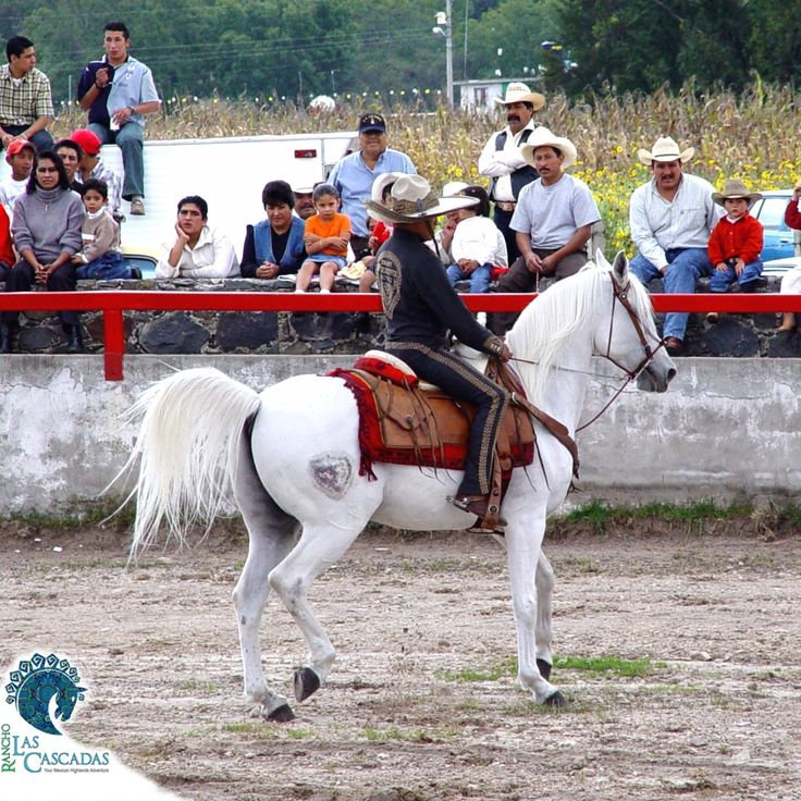 """Did you know... The charreada is a competitive event similar to rodeo and was developed from animal husbandry practices used on the haciendas of old Mexico. The sport has been described as """"living history,"""" or as an art form drawn from the demands of working life."""