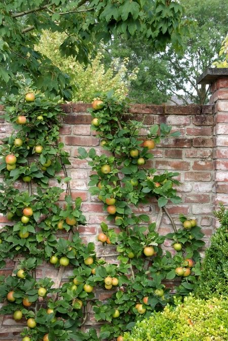 Leifruit tegen mooi oud bakstenen muurtje