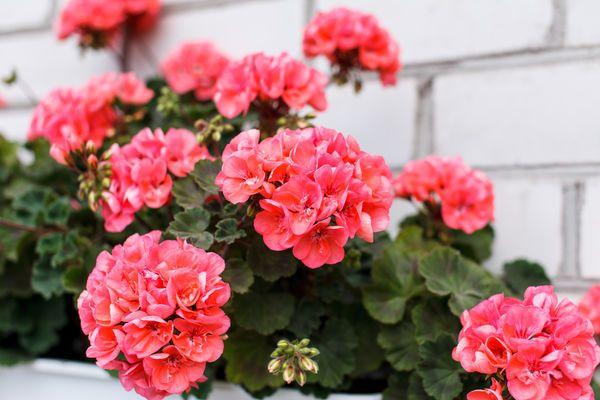 15 комнатных растений, улучшающих воздух.