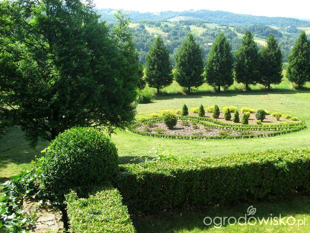 O....! - strona 474 - Forum ogrodnicze - Ogrodowisko