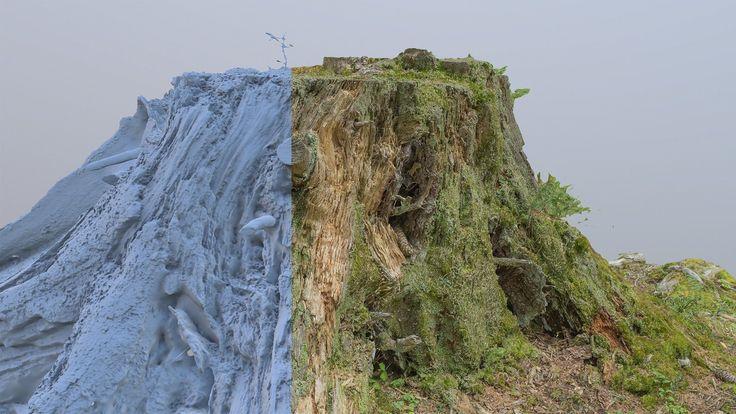 ArtStation - Tree stump, Romain Rouffet