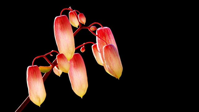 Scientists Invent Grow-in-the-Dark Plants