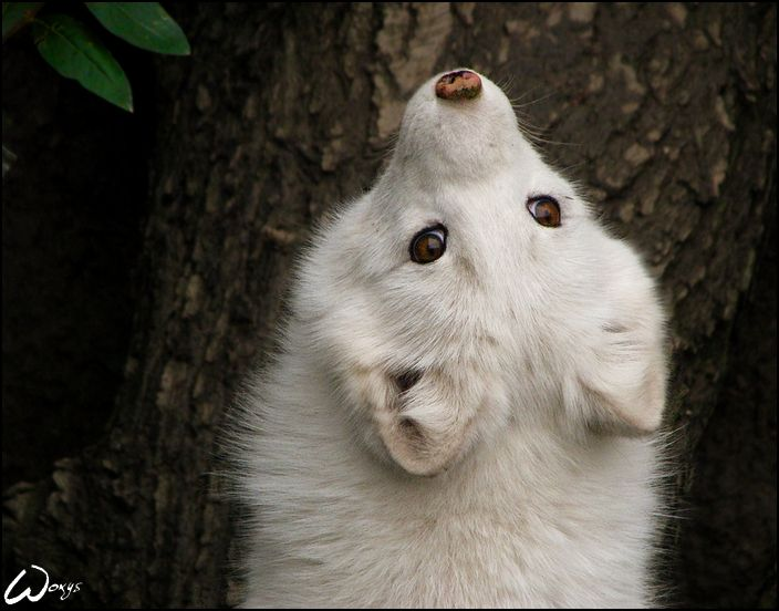 Google Image Result for http://www.deviantart.com/download/150532313/Baby_fox__worl_upside_down_by_woxys.jpg