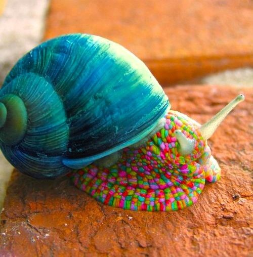 Amazing India Animals....the colors are a big WOW...how can a snail be so pretty?