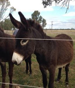 Tails the donkey from Bindarra Creek Makeover