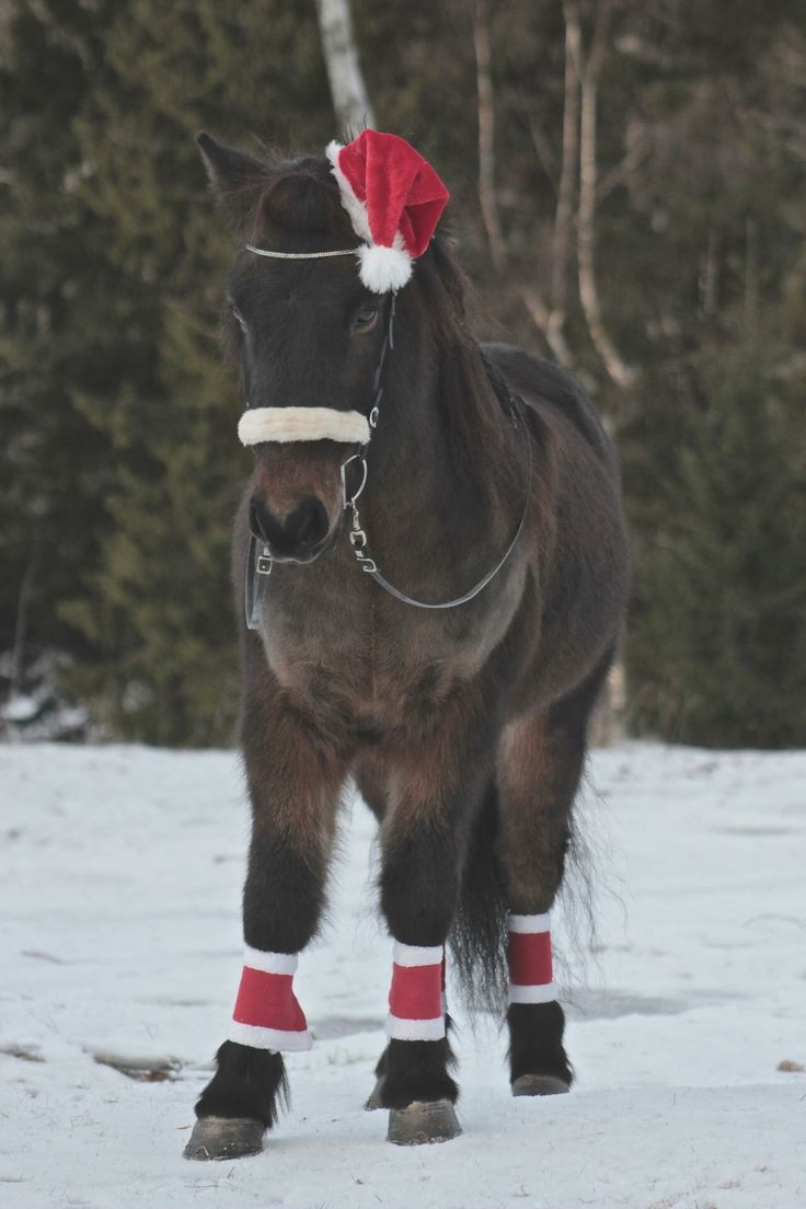 122 best santa claus hats images on pinterest hats animals and