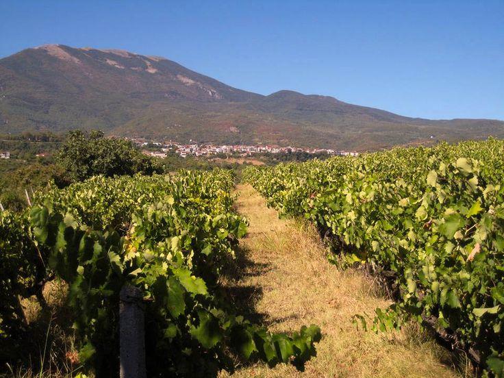 Melitzanis Winery, Gastra   Naoussa