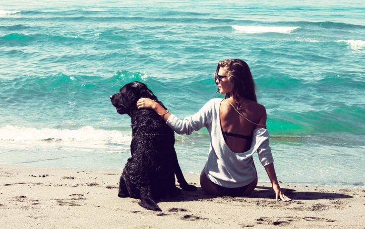Who loves the salt, sand and sea more than us humans? Our furry best friends!