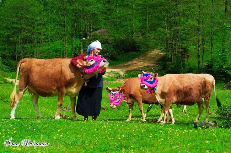 Trabzon yaylaları şenlendi Fotoğraflar: İnan KALYONCU