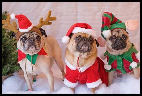 Вязаный новогодний костюм для собак