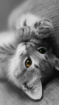 CoolCat TreeHouse Schauen Sie in unserem Laden vorbei, wenn Sie Katzen lieben! 👉www.kawaiikitty.co Folgen Sie uns für mehr [Pawsome|Purrsome|Furrsome|Pawtastic] Katze weiter …
