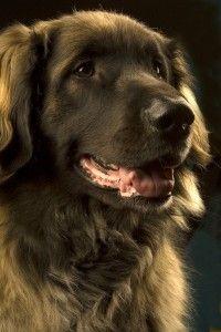 Contact met andere honden