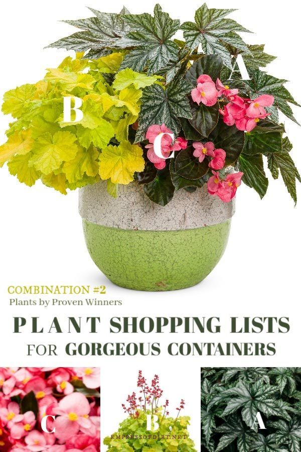 Plant Shopping List For Beautiful Containers 2 Of 3 Plants