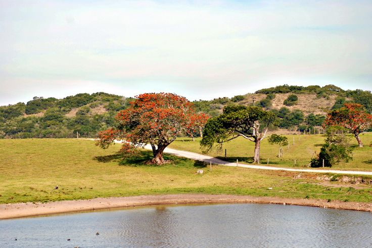 Landscape near Port Alfred, South Africa.