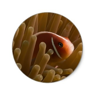 Round Sticker with cute clownfish.
