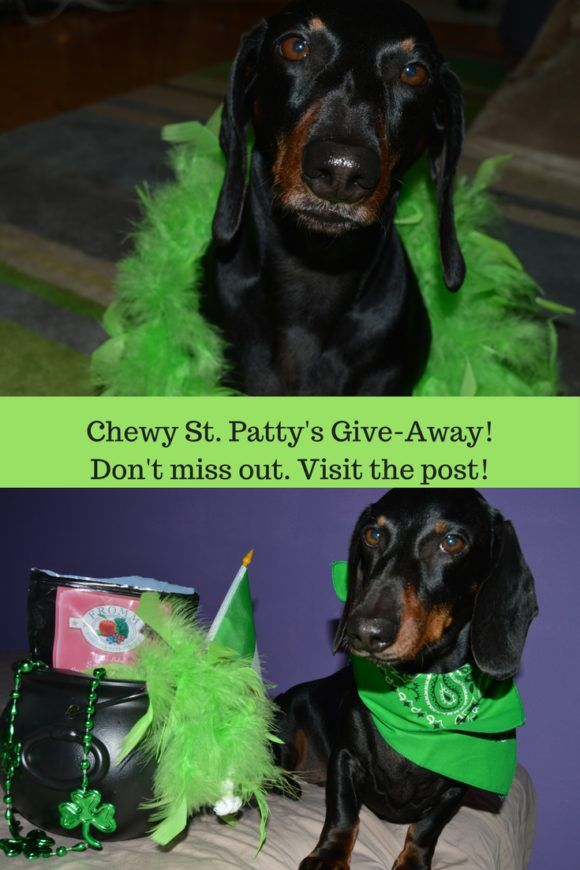 Enter to win a Chewy giveaway and happy St. Patty's Day!