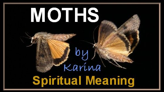 Meaning of moths