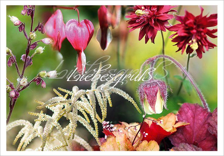 Bepflanzungskollektion für Gräber im Halbschatten mit roten Blüten und Laub
