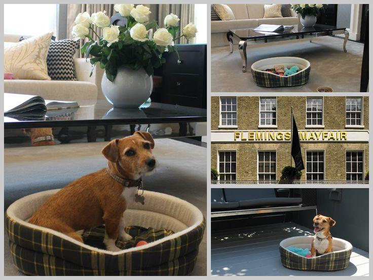 Fleming S Mayfair Luxury Pet Friendly Hotel In London Petfriendlyhotel