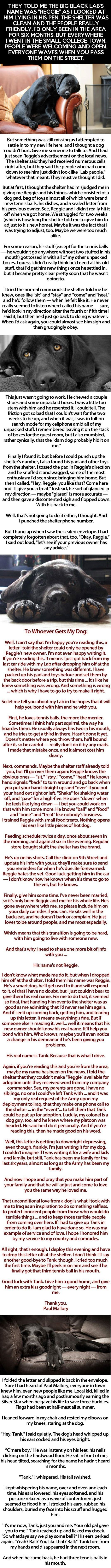 OK I am still crying after reading this... Even the animals of our servicemen and women sacrifice