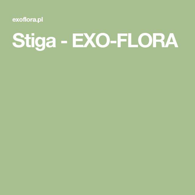 Stiga - EXO-FLORA