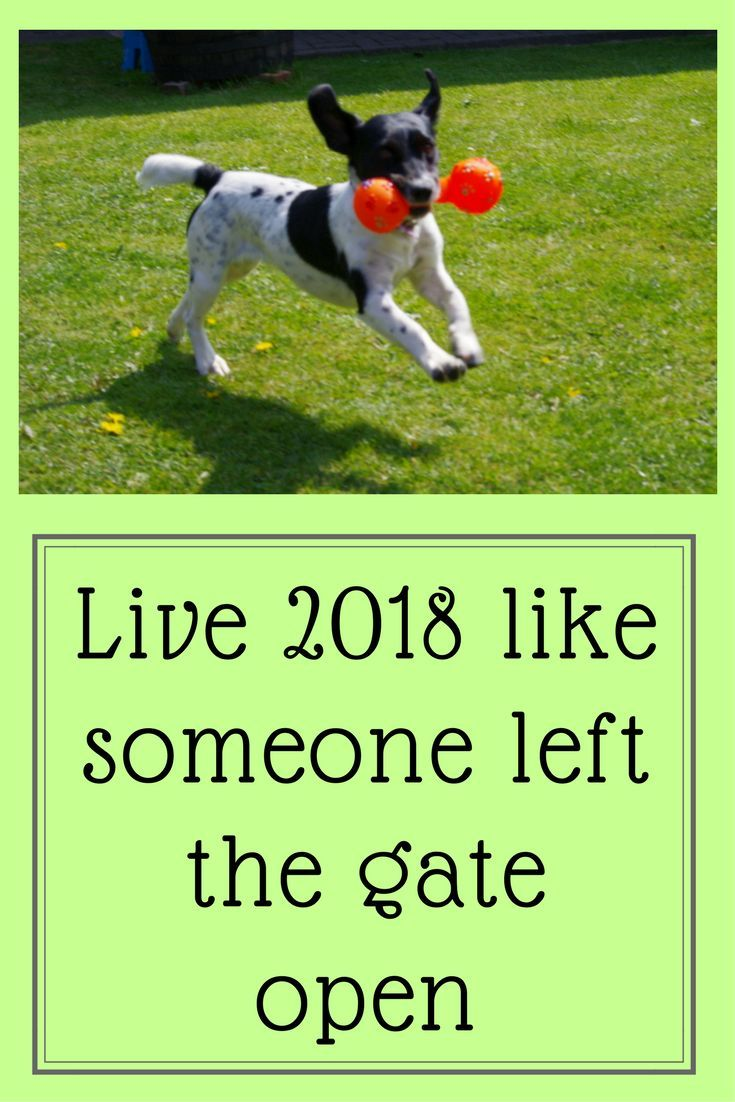 Happy New Year From Everyone At Waggytalesdogblog Keep Those