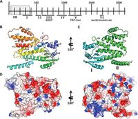 Structure and Function of the N-Terminal Domain of the Vesicular Stomatitis Virus RNA Polymerase