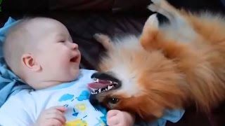 Cute Cats and Dogs Love Babies Compilation 2015 - Dogs 2015 - Cats 2015 - 720p
