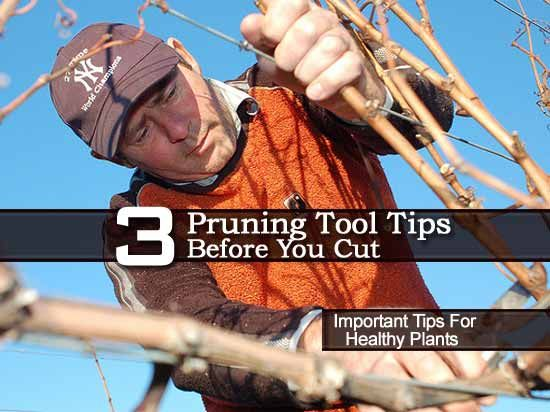3 Pruning Tool Tips Before You Cut – Video