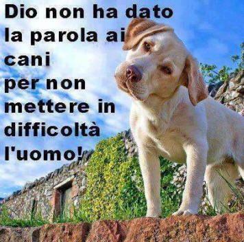 ANIMALI Cani e Gatti - FRASI DIVERTENTI E SIMPATICHE ...