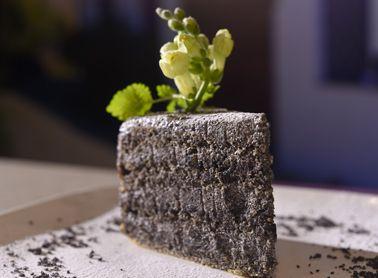 Makovo maková torta